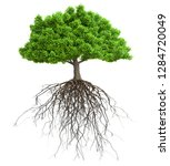 tree with roots isolated 3d... | Shutterstock . vector #1284720049