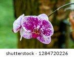 orchid in the botanical garden...   Shutterstock . vector #1284720226