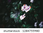 wild exotic tropical white... | Shutterstock . vector #1284755980