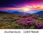 magic pink rhododendron flowers ... | Shutterstock . vector #128478668