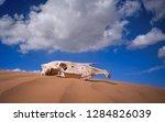 Saiga Skull In The Desert....