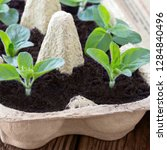 Gardening With Egg Box And Soil