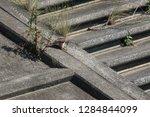 wild birds living in urban... | Shutterstock . vector #1284844099