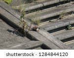 wild birds living in urban... | Shutterstock . vector #1284844120