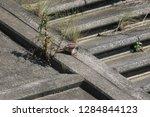 wild birds living in urban... | Shutterstock . vector #1284844123