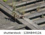 wild birds living in urban... | Shutterstock . vector #1284844126