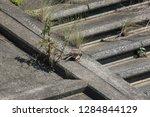 wild birds living in urban... | Shutterstock . vector #1284844129