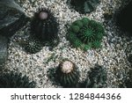 top view on green tropical...   Shutterstock . vector #1284844366