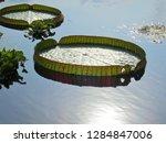 gigantic victoria waterlilies...   Shutterstock . vector #1284847006