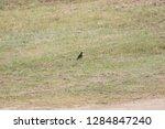 sturgeon living in an urban... | Shutterstock . vector #1284847240