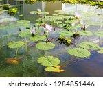 waterlilies in a botanic garden   Shutterstock . vector #1284851446