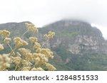 flowers in kirstenbosch...   Shutterstock . vector #1284851533