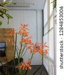 succulent plant with orange...   Shutterstock . vector #1284853006