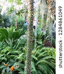 succulent plant in a botanic...   Shutterstock . vector #1284861049