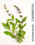 common sage botanical board   Shutterstock . vector #1284880543