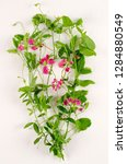 dutch mice botanical board   Shutterstock . vector #1284880549