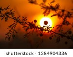 small flower in sunrise. | Shutterstock . vector #1284904336