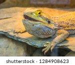 lizard close up | Shutterstock . vector #1284908623