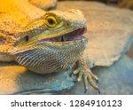lizard close up | Shutterstock . vector #1284910123