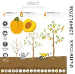 apricot beneficial features... | Shutterstock .eps vector #1284912706
