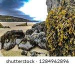 Seaweed On Shore  Isle Of Lewis ...