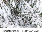 beautiful background with gray... | Shutterstock . vector #1284964960