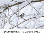 beautiful background with gray... | Shutterstock . vector #1284964963