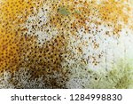 lemon with moldy peel. | Shutterstock . vector #1284998830