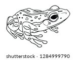Realistic Frog Line Drawing...