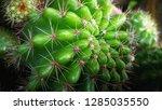 the naturals cactus | Shutterstock . vector #1285035550