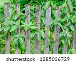 old wooden fence with shrub | Shutterstock . vector #1285036729