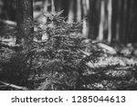 sunlight rays in forest  little ... | Shutterstock . vector #1285044613