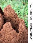 termite mound in sigiriya  sri... | Shutterstock . vector #1285098793