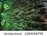 moss  lichen and ferns on... | Shutterstock . vector #1285098799