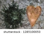 tree trunk with a heart and a... | Shutterstock . vector #1285100053
