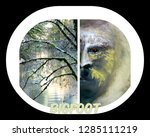 Stock photo tree and abstract face of animal bigfoot 1285111219