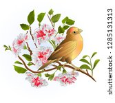 small song bird on  thrush and... | Shutterstock .eps vector #1285131313