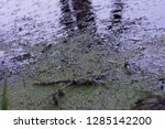 pollution of the natural... | Shutterstock . vector #1285142200