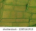 pictures of rice fields in ubud ... | Shutterstock . vector #1285161913
