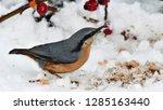 nuthatch bird on feeder | Shutterstock . vector #1285163440
