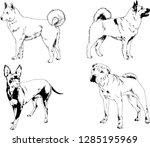 vector drawings sketches... | Shutterstock .eps vector #1285195969