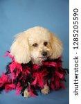 dog photo shoot. beautiful... | Shutterstock . vector #1285205590