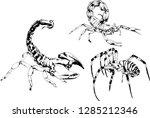 vector drawings sketches... | Shutterstock .eps vector #1285212346