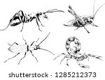 vector drawings sketches... | Shutterstock .eps vector #1285212373