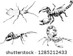 vector drawings sketches... | Shutterstock .eps vector #1285212433