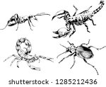 vector drawings sketches... | Shutterstock .eps vector #1285212436