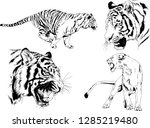 vector drawings sketches... | Shutterstock .eps vector #1285219480