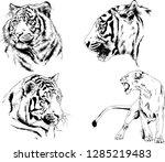 vector drawings sketches... | Shutterstock .eps vector #1285219483