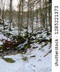 Stock photo stream of thaw in a beech forest snowy landscape in selva de irati navarra spain 1285221373