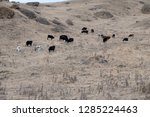 caucasian cattle breeding ... | Shutterstock . vector #1285224463
